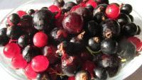 Beeren frisch aus dem Garten