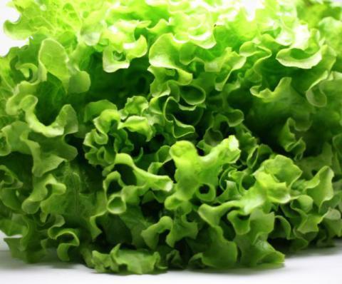 Salate im winter