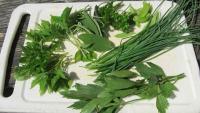 Küchenkräuter, frisch gepflückt im Garten: Petersilie, Schnittlauch, Salbei, Giersch, Zitronenmelisse