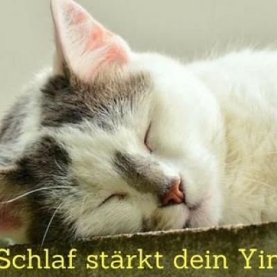 Schlafende Katze - Schlaf stärkt dein Yin.