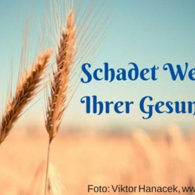 Schadet Weizen deiner Gesundheit? Foto Weizenfeld von picjumbo.com, Viktor Hanacek
