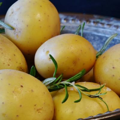 Kartoffeln stärken den Magen