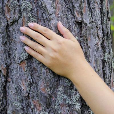 Foto von einer Hand auf einem rauen Baumstamm - eine Metapher für die trockene, juckende Haut bei Neurodermitis
