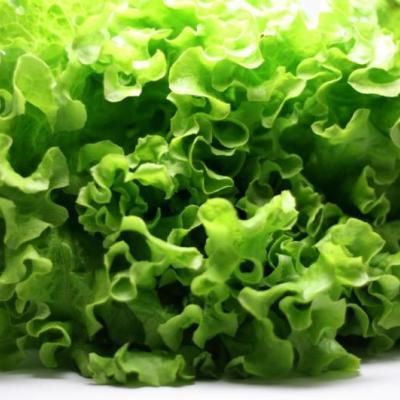 Grüner Salat ist nichts für den Winter.